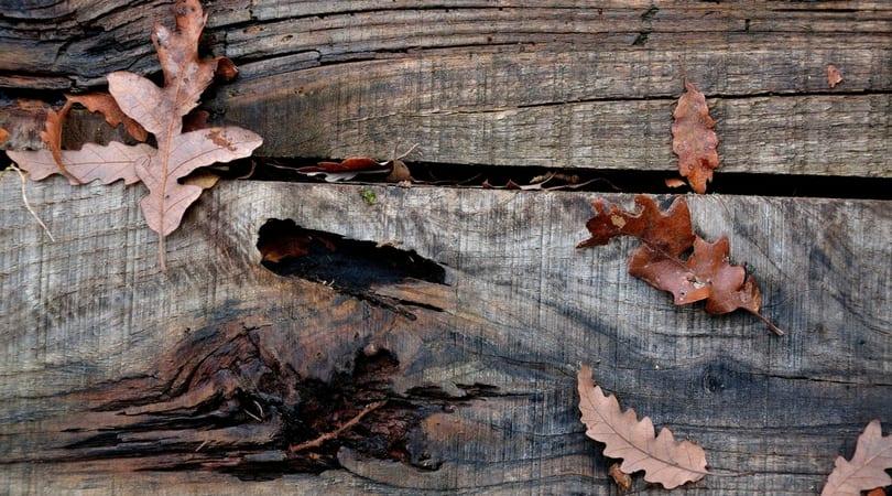 Dirty Deck Hammond Lumber