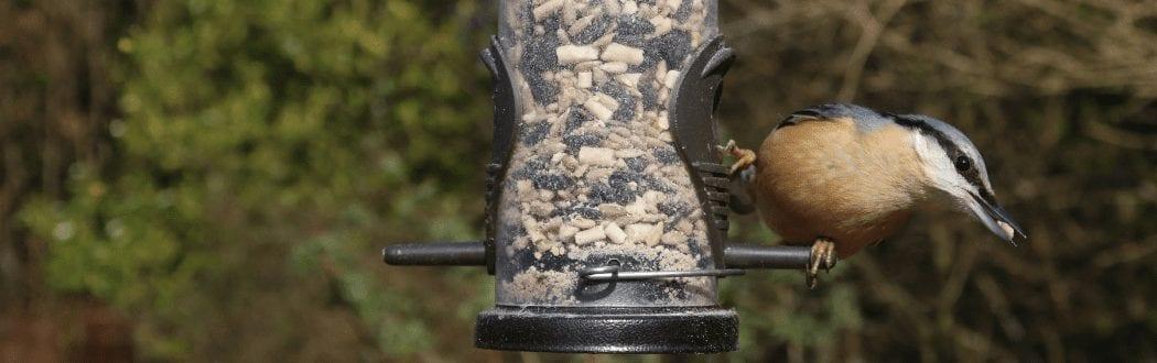Bird Feed at Hammond Lumber Company