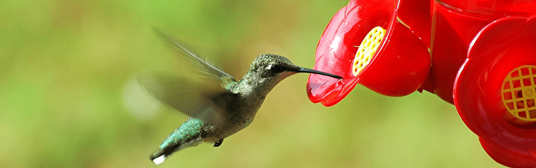 Hummingbird Feeders Hammond Lumber Company